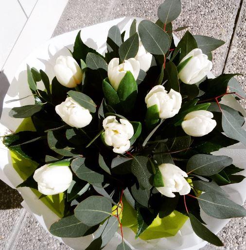 immagini tulipani