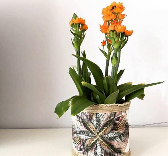 fiori arancione ornitogallo