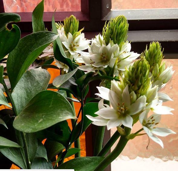 piante con bulbi