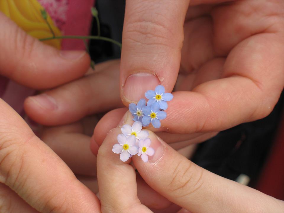 fiori non ti scordar di me