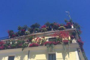Piante e fiori da balcone con esposizione a est le for Fiori ornamentali