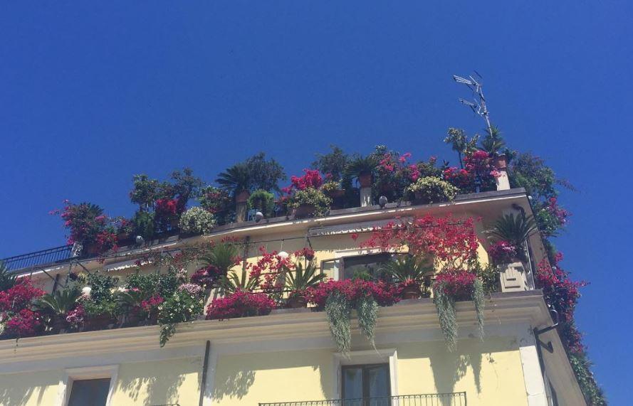 Piante Balcone Est : Piante e fiori da balcone con esposizione a est le