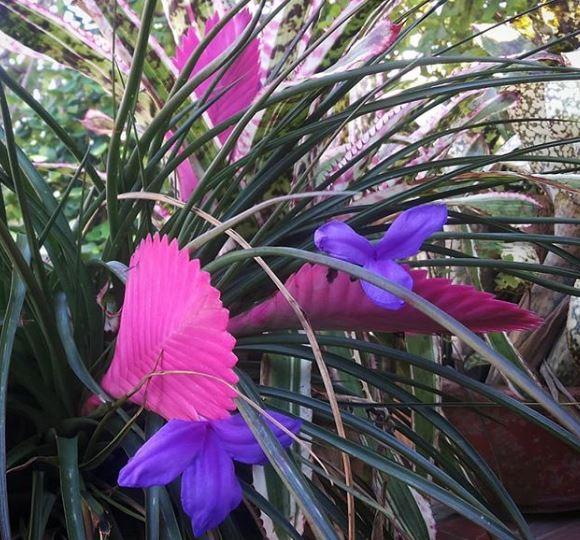 piante d aria