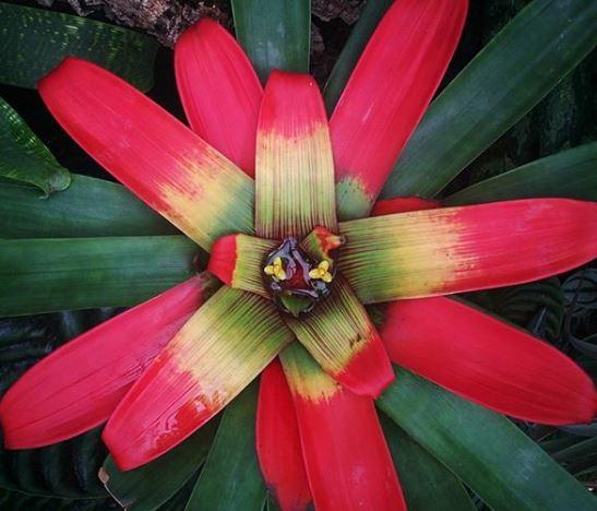 pianta da appartamento con fiori rossi