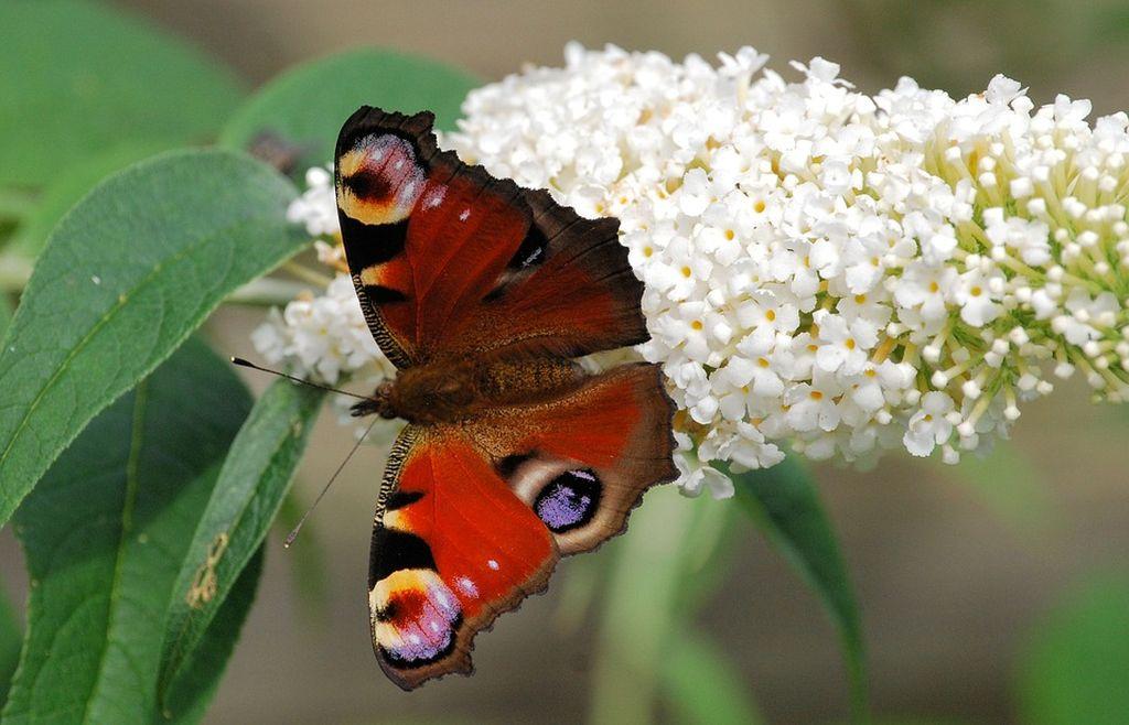 l albero delle farfalle