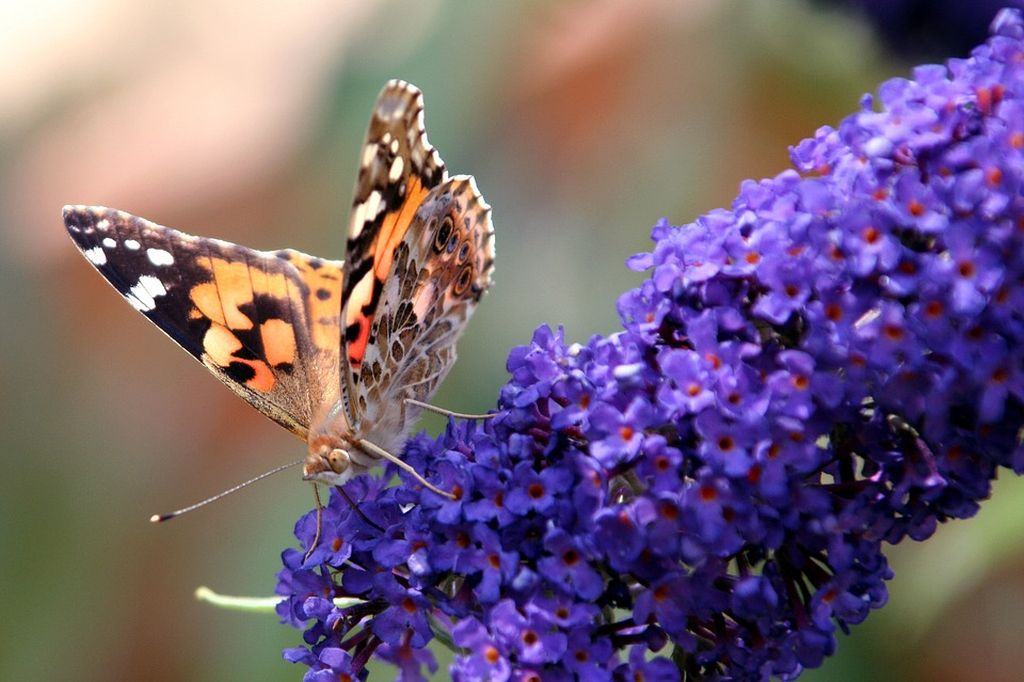 un fiore violetto