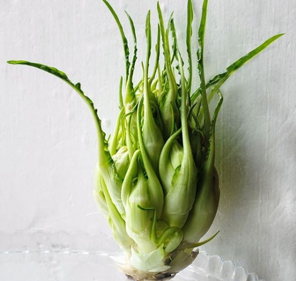 catalogna verdura