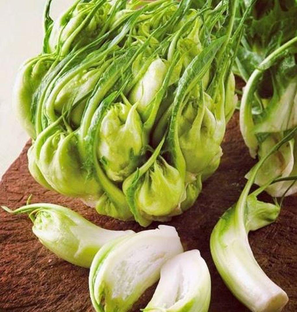 verdure catalogna