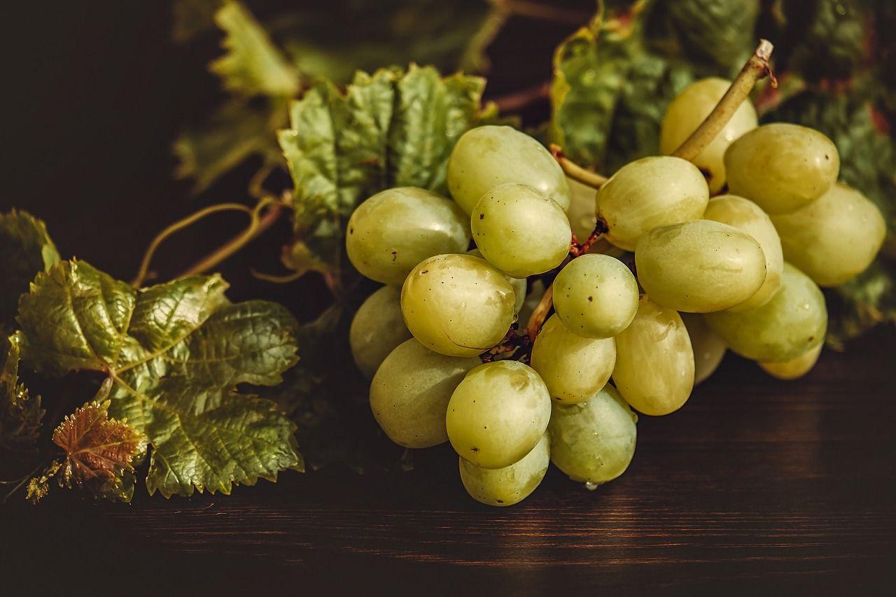 Coltivare uva da tavola guida per principianti - Uva da tavola coltivazione ...