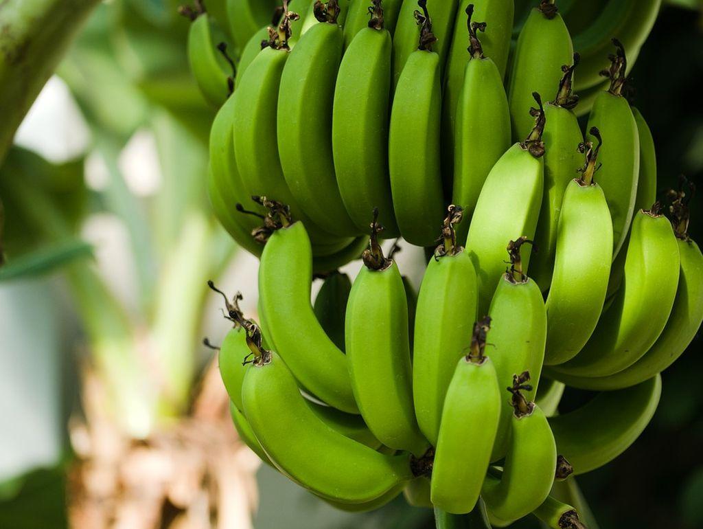 banano in vaso