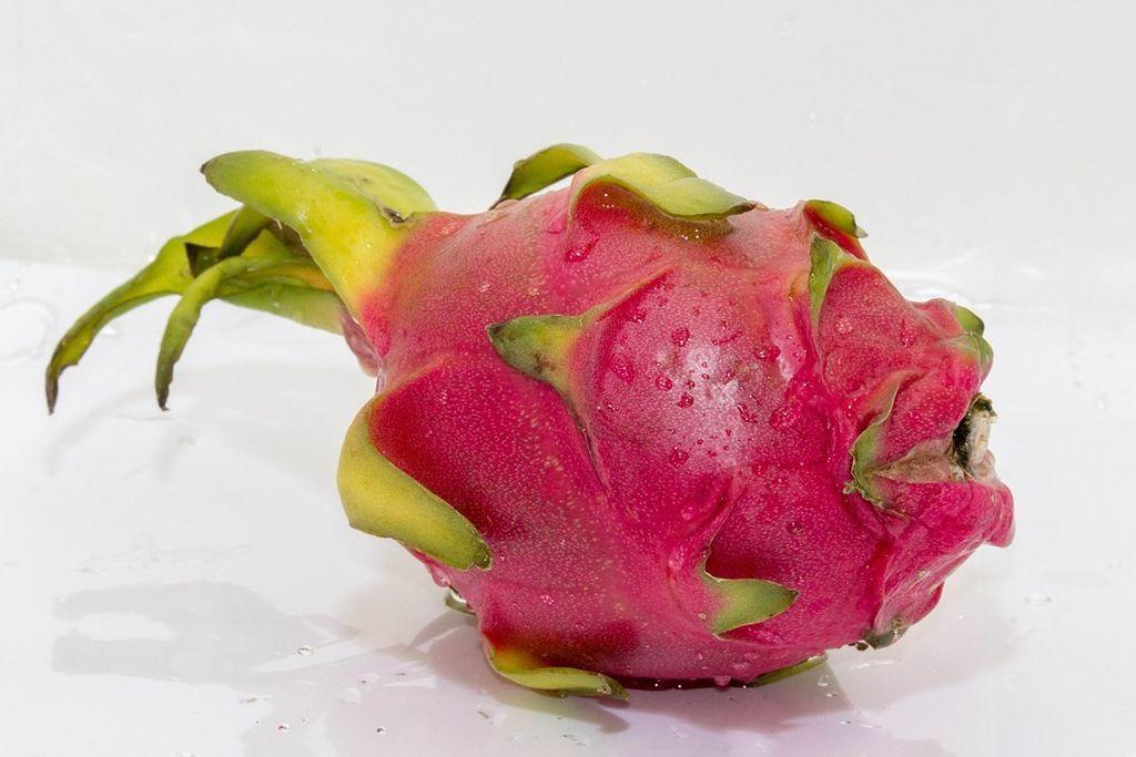 pitaya pianta