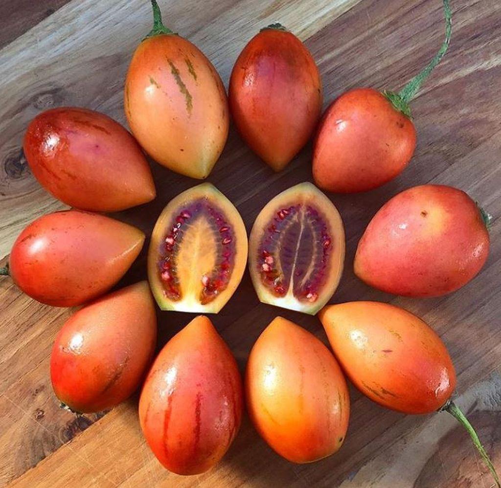 albero del pomodoro cyphomandra betacea