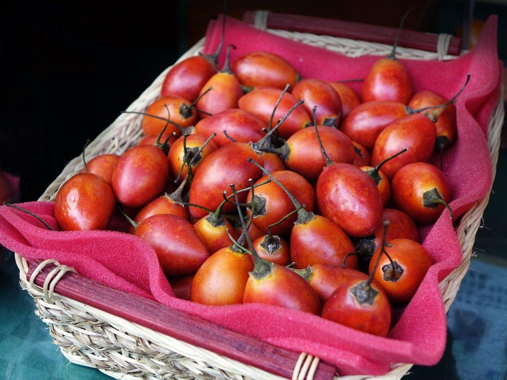 albero dei pomodori